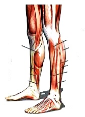 alt bacak kalınlaştırma egzersizleri